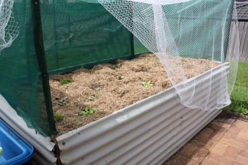 Corrugated Iron: Corrugated Iron Raised Garden Beds